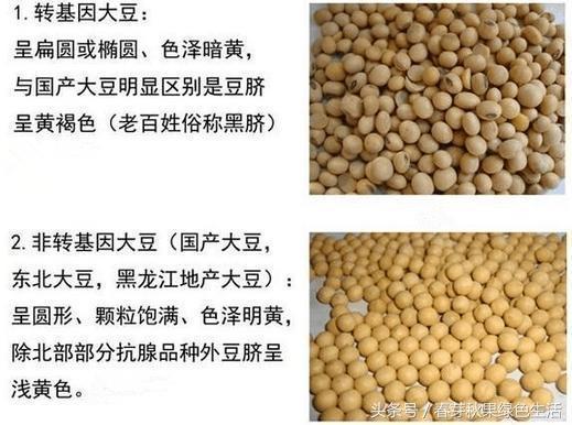 吃了這麼多年大豆,你分清楚轉基因大豆和非轉基因大豆嗎?
