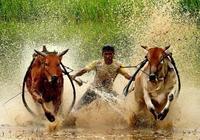民間故事:貪婪村民套狗拉犁騙神仙,牛神一怒,九頭黃牛變石牛