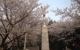 美麗江城——武漢大學!