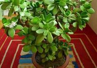 家裡有這5種花,剪1片葉子扔盆裡,10天生根發芽,看看你家有嗎?