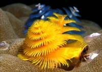 全球最漂亮的珊瑚 海內植物美圖「太美了,快分享給朋友吧!」