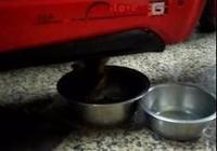 大型真香現場,爸爸說抓流浪貓回家就丟掉,3周後主動抱貓咪上肚