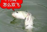 釣魚打窩千萬別用這個,否則你會懷疑人生!