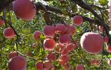 還記得我家的果園嗎?歡迎來採摘啦!