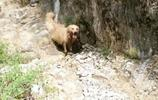 狗通人性,瞧,這就是農村狗的本領,它在幹什麼。