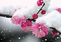 「朗誦」素心若雪,淺舞流年