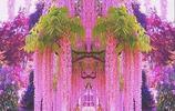哇塞!嫂子家種的這是什麼花,簡直太美了,爬滿牆,滿院飄香