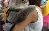 """擁有30粉絲的網紅貓,萌翻眾人,大家都叫它現實版的""""湯姆貓""""!"""