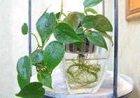 原來水培還有這幾種方法,隨便一種都能把花養爆盆,可算長見識了