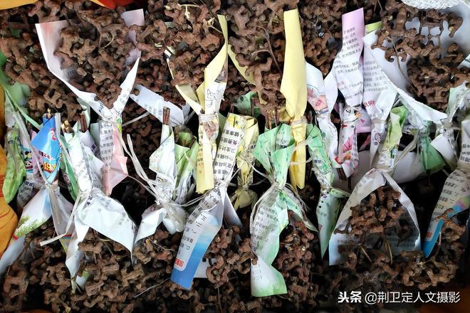 """農村8旬老人爬樹採摘""""萬壽果""""1元1把,城裡人上門求購說賺大了"""