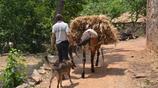 河南一山村用傳統方式收割小麥,再現二三十年前的熱鬧場面