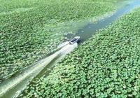 洪湖:紅色熱土 綠色行動