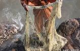 青島棧橋成開心漁場,捕魚達人捕獲3斤重大梭魚,回家下酒爽呆了