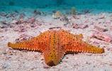 海底世界圖集:多彩的海星