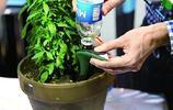 花盆的土變硬板結怎麼辦?教你一招不需換土,花兒蹭蹭地長!