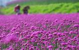重慶大觀香草園