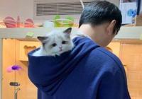 """王思聰晒高顏值貓咪新寵,你知道校長有個""""寵物動物園""""嗎?"""