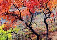 """有人驚呼這裡是""""世外桃源"""",進入秋天,又成了京城紅葉新地標!"""