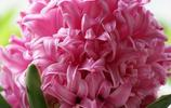 家裡的陽臺收拾一下種上它,果香不斷花香四溢,365天都好心情