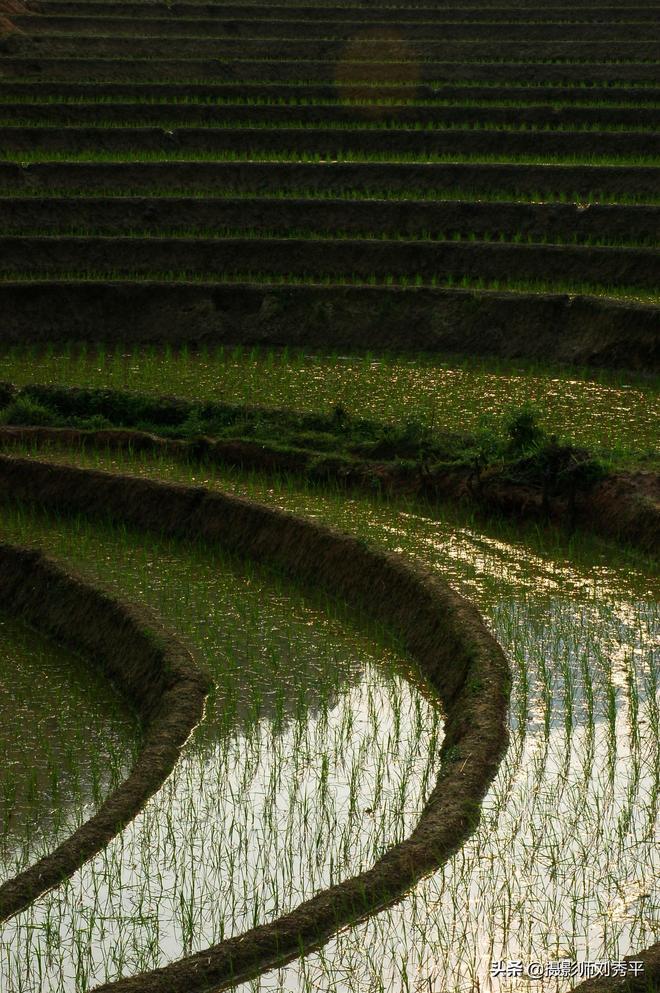江西永新最美的田園風景,你家鄉的稻田有這麼美嗎?