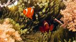 海底世界向人們展示了一種純樸而高雅的現代化大型海洋館