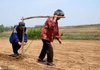 中國農村殘酷現實:7億農民全部回家種地,肯定不可能發家致富