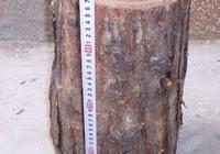 農村的香椿木有哪些作用?