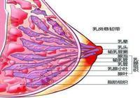 什麼是急性乳腺炎?遇上急性乳腺炎怎麼辦?