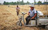 三夏小麥收穫季,農民一點也高興不起來,6畝地賣了不到3千元