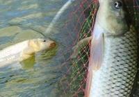 憋了一年沒釣魚,必須夜釣一把才過癮,論夜釣如何提高鯉魚爆護率
