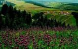 你知道北疆沿天山一帶的景色有多麼美嗎?