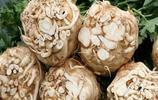 你還在吃普通的芹菜,現在流行吃芹菜的根了