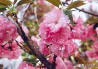 春季養肝正當時,多吃這7種食物,疏肝護陽氣,渾身都舒坦!