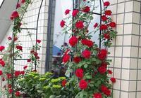 """院子裡,就養這""""4種植物"""",花量大好養護,年年開花格外美"""