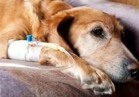 你以為這樣餵養狗狗就健康了嗎?大錯特錯,你這是在害它!