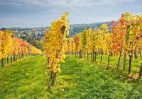 維也納森林的秋