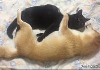 柴犬不把貓咪當回事兒,每天變著花樣捉弄貓咪,貓:誰來救救朕?