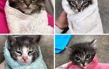 用小毯子把奶貓捲起來,這樣的小寶寶你想來幾個?
