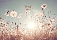 向日葵看不到太陽也會開放,生活看不到希望也要堅持