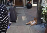 酒店請的門童很葛優啊!
