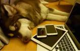 實拍:王思聰愛犬王可可的日常生活,待遇堪比王思聰