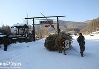 吉林通化縣銀色經濟助脫貧
