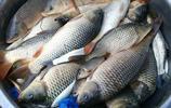 這裡有個荷花村,可以釣魚,還有鐵鍋燉魚吃,一斤才16元
