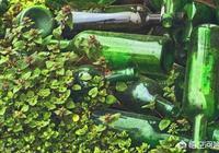農村裡有些農民播種花生、玉米以後,為何要放幾個空酒瓶地裡,有什麼用?