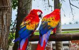世界上最漂亮的10種鳥,每一種都是大自然的活精靈