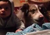 狗狗為了好吃的,竟和小主人搶著叫媽媽,看了讓人哭笑不得!