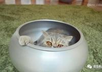 怕家裡兩隻貓熱著,主人給他們買了降溫盆,結果人家根本不稀罕