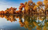 輪臺胡楊林:最美麗的不朽黃金森林