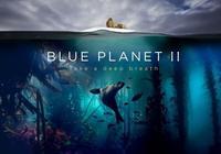 豆瓣影評: 看完《藍色星球2》第一集,我被震撼得像個傻子