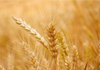 我國的三個糧食大省,糧食儲量能養活半個國家,你能猜到是哪嗎?